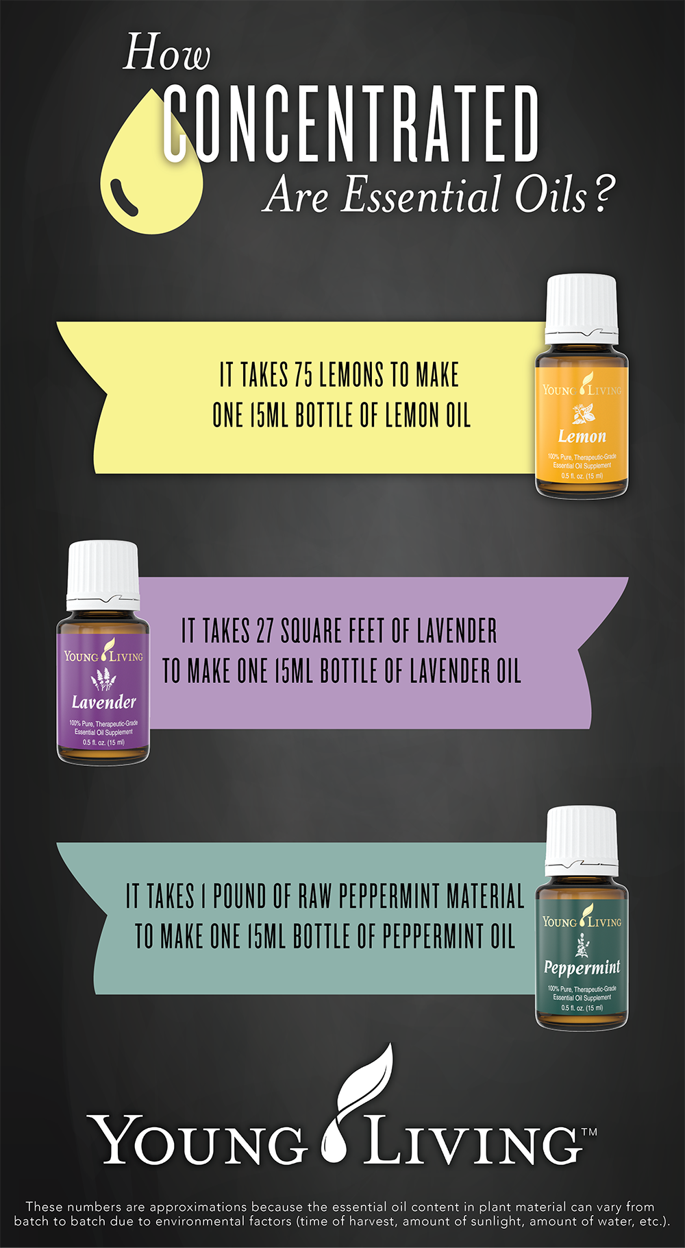 Interesting Facts about Young Living Essential Oils